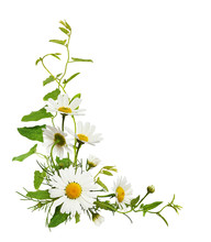 Daisy Flowers And Bindweed Leaves In A Corner Floral Arrangement