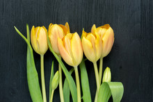 Five Beautiful Yellow Tulips