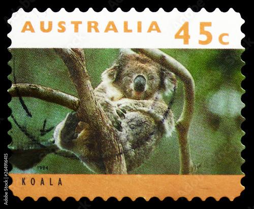 Fotografia  Koala (Phascolarctos cinereus), Kangaroos and Koalas serie, circa 1994