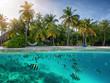 Blick auf einen tropischen Strand mit Palmen und bunten Fischem im türkisem Meer, Malediven