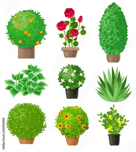 Canvas-taulu Garden plants set