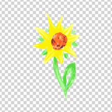 Watercolor Sunflower On Transp...