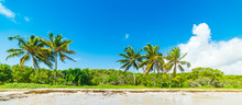 Clear Sky And Palm Trees In Gu...