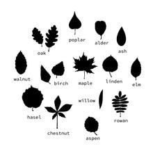 Vector Set Of Black Leaves Sil...
