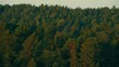 An aerial footage of coastal pine forest you can see layers of green pine