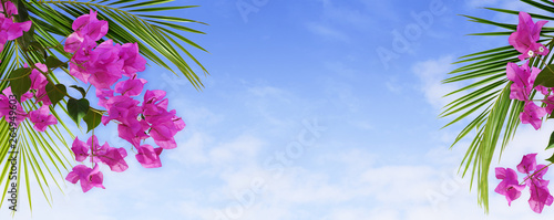 Canvas Bougainvillea flowers and palm leaves in a tropical arrangement on blue sky
