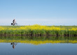 man rides bicycle along water of valleikanaal near leusden in the netherlands and passes yellow blooming flowers of rapeseed