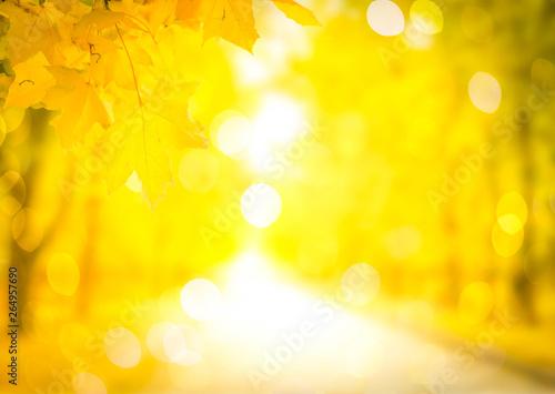 Foto auf AluDibond Gelb Vibrant fall foliage