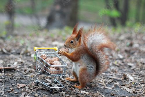 In de dag Eekhoorn Red squirrel with shopping cart