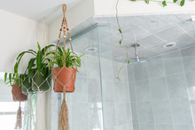 A Jute Twine Macrame Plant Hanger Is Hanging From The Ceiling In A Washroom, Beside A Shower. A Spider Plant (Chlorophytum Comosum) Is Hanging Inside The Planter. A Cotton Macrame Is Hanging Beside.