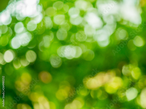 Fototapety, obrazy: green nature background, abstract green bokeh
