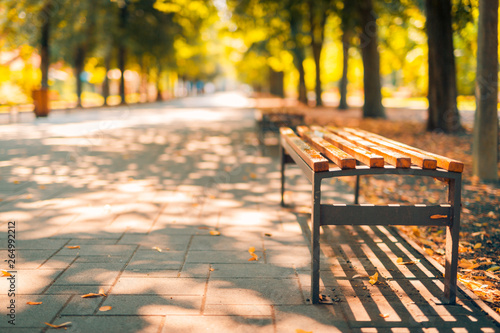 Fotobehang Khaki Empty bench in the autumnal park with blurred colorful background