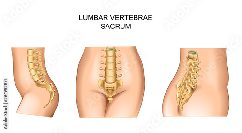 Fototapeta  sacrum and lower back