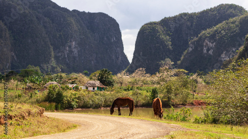 Photo landscape in vinales with horses in the mountains