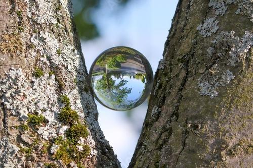 Fotografija  Baum spiegelt sich in Glaskugel