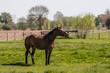 Pferd auf der Weide im Frühling