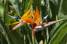 Colorful Flower Bird Of Paradi...