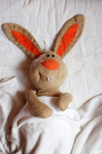 Rabbit In The Hospital