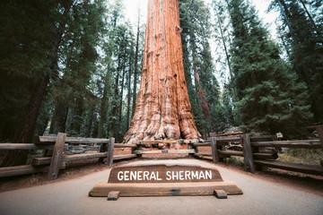 Drvo generala Shermana, najveće stablo na svijetu po volumenu, Nacionalni park Sequoia, Kalifornija, SAD