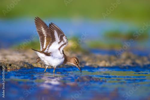 Платно Water bird