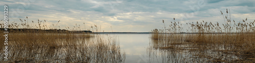 spring water landscape. wide panoramic view from the shore of the lake through the coastal reeds on a cloudy evening