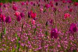 Fototapeta Kwiaty - Kolorowe kwiaty na łące