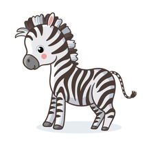 Zebra Is Standing On A White B...