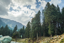 A Typical Landscape Of Kashmir, India With Pine Trees, Mountains And Dramatic Cloudy Skies