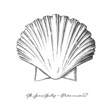 St James Scallop Vintage Engra...