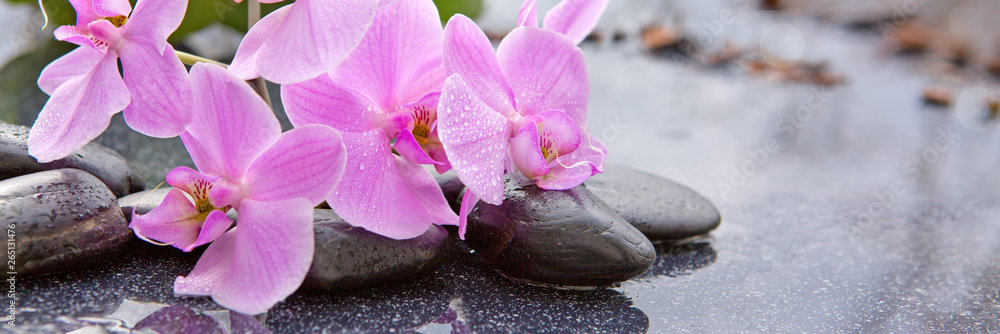 Fototapety, obrazy: Spa stones and pink orchid on gray background.