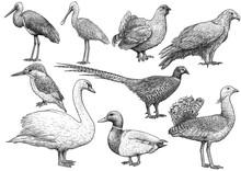Bird Collection Illustration, ...