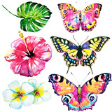 beautifu tropical  butterflies and flowers,watercolor,isolated on a white