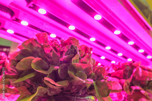 Valokuva  LED lighting used to grow lettuce inside a warehouse