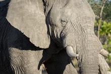 Namibia, Elephant, Etosha