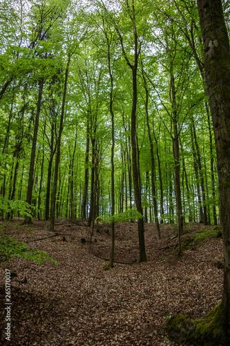 Photo Stands Road in forest Bäume im Wald mit beginennder Belaubung