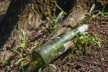 Old Long Time Lost Wine Bottle On Forest Flor, Nature Pollution