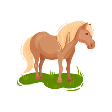 Pony Grazing In The Meadow. Vector Illustration.