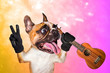 canvas print picture - funny dog ginger french bulldog musician with ukulele listening to music. Animal on a pink orange bright background