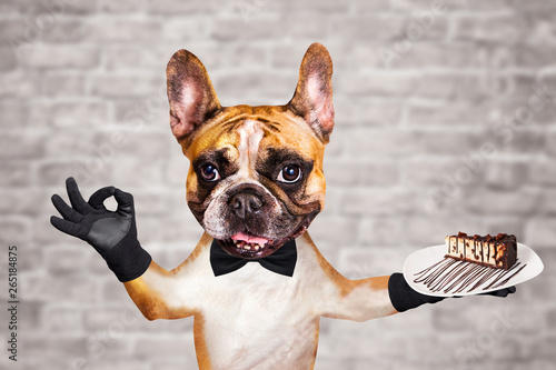 Keuken foto achterwand Franse bulldog funny dog ginger french bulldog waiter in a black bow tie hold a dessert pie on a plate and show a sign approx. Animal on brick wall background