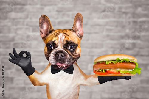 funny dog ginger french bulldog waiter in a black bow tie hold a hot dog with sausage and bun and show a sign approx. Animal on brick wall background
