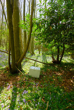 Dishwasher In A Bluebell Wood,...