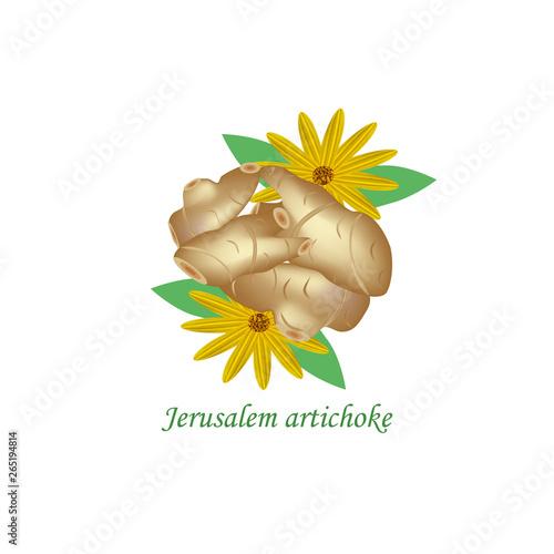 Photo  Jerusalem artichoke. Vector illustration on isolated background