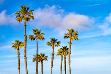 Palm Trees With Clouds And Blue Sky