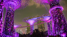 Impressive Supertrees At The Gardens By The Bay, Singapore