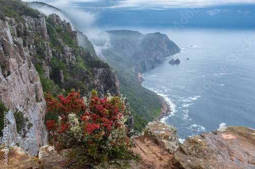 Cape Raoul, in mist and dramatic clouds and with bush with red berries in foregr Wallpaper Mural
