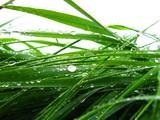 krople deszczu na trawie