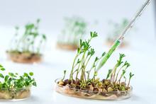 Lab Assistant Adding Pesticide...