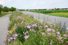 Grünstreifen Mit Wildblumen Zwischen Straße Und Radweg.