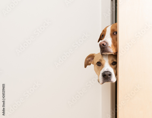 Photo sur Toile Chien Sneaky Dogs Looking Through Door Way into Room
