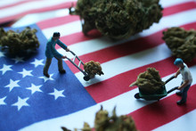 Marijuana Industry In The United States With Men Moving Their Cash Crop